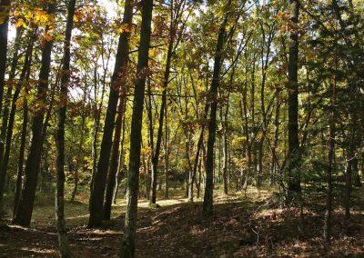 1er-Filandón-Trizas-y-Trazos-alrededores-árboles