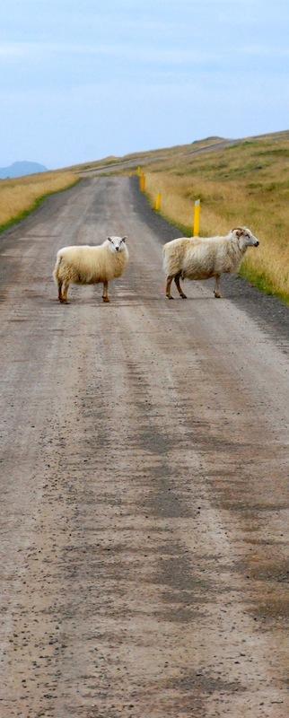 foto Islandia ovejas lopi Cecilia García Rodrigo